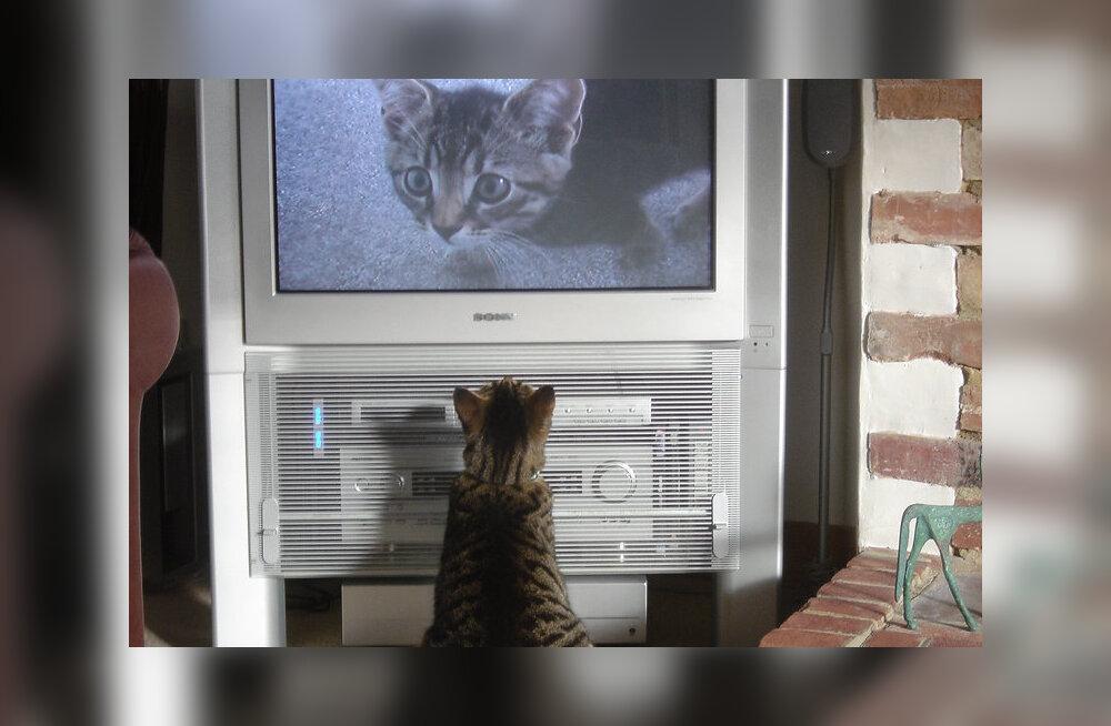 Teadlased selgitavad: Kuidas kassivideote vaatamine õigupoolest tervist mõjutab?