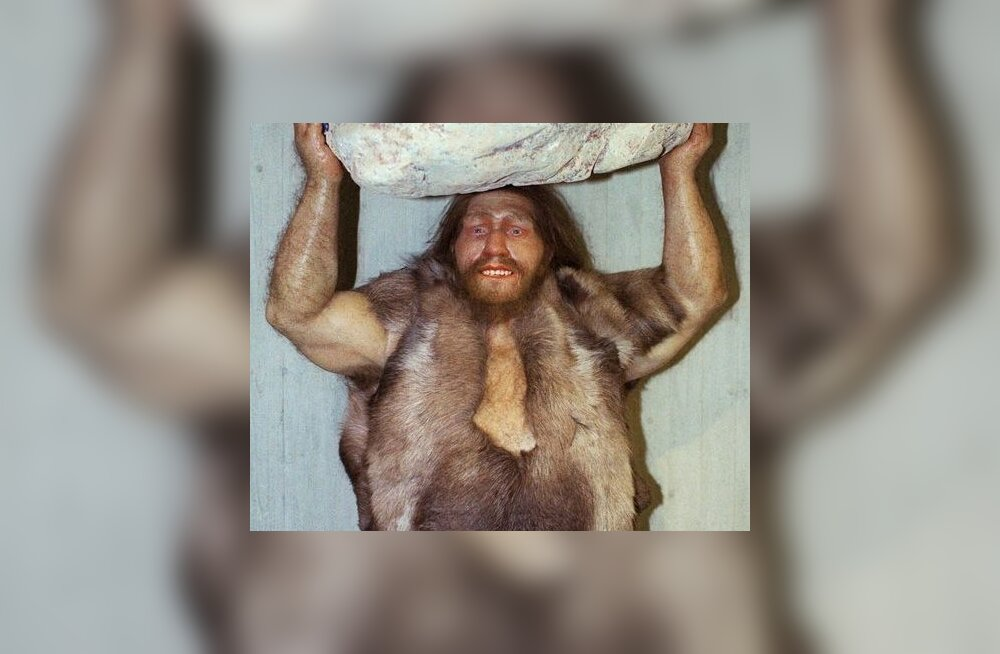 FILE - This Oct. 1996 file photo shows a replica of a Neanderthal man at the Neanderthal museum in Mettmann, western Germany.  According to research reported in the Friday, May 6, 2010 edition of the journal Science, between 1 percent and 4 percent of gen