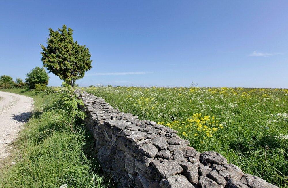 Saaremaa loodus