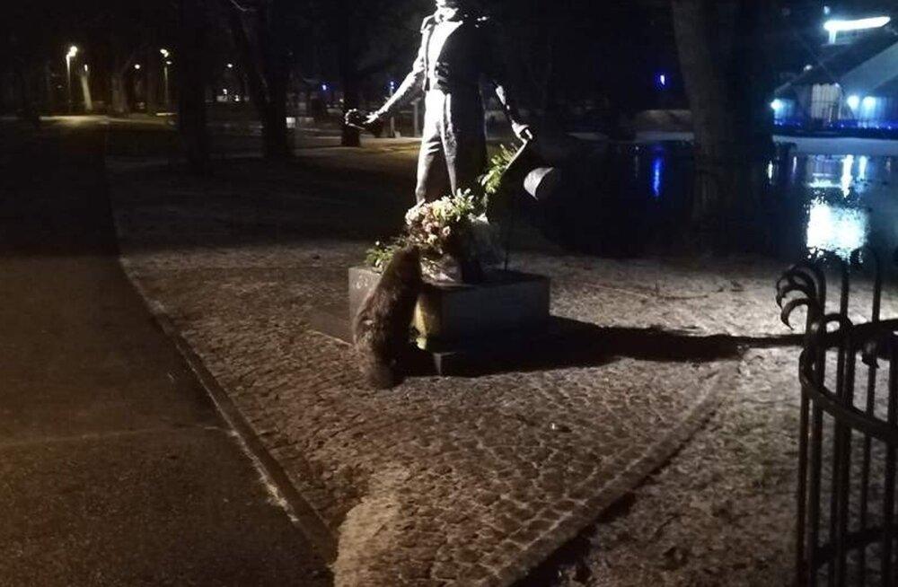 VIDEO   Riia linnakobras sõi Puškini ausambale asetatud lilli
