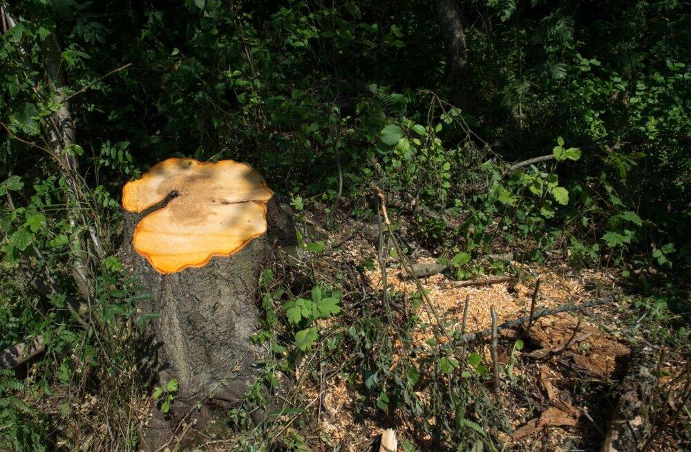 Rootsi metsades raiemahud vähenesid, Soomes suurenesid