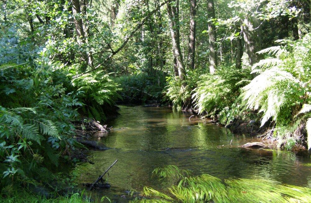 Selline jõelõik on ebapärlikarbi jaoks arvatavasti heas seisukorras. Sääraseid kohti on aga ka nende viimases elupaigas Pudisoo jões napiks jäänud.
