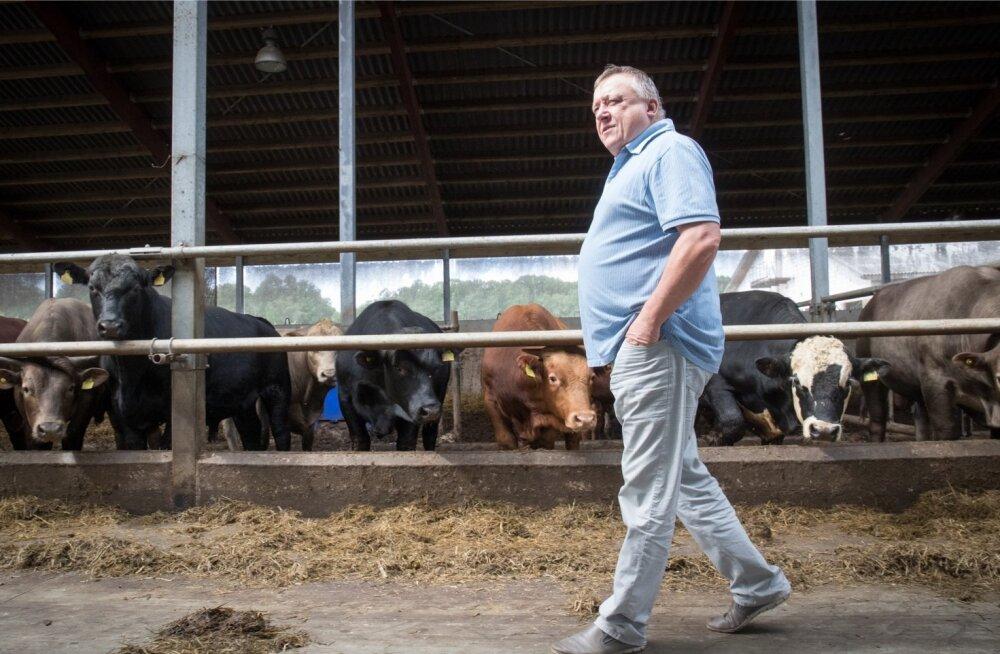 Vjatšeslav Leedole kuulub Eesti suurim lihaveiste nuumafarm.