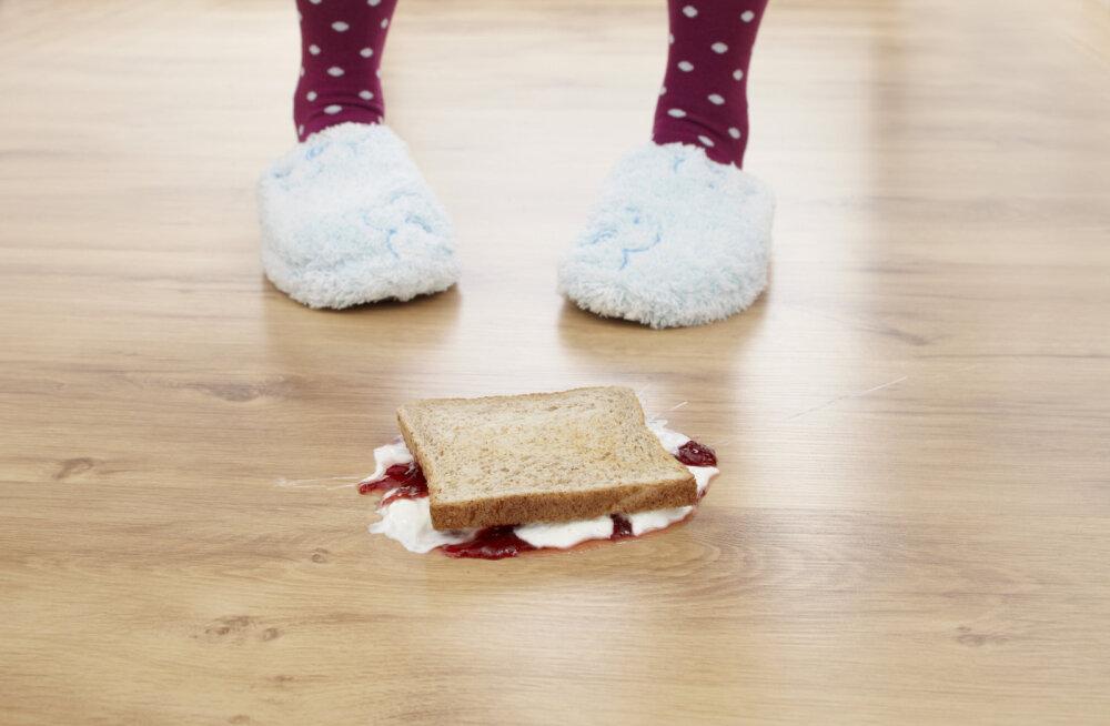 Что на самом деле происходит с едой, упавшей на пол
