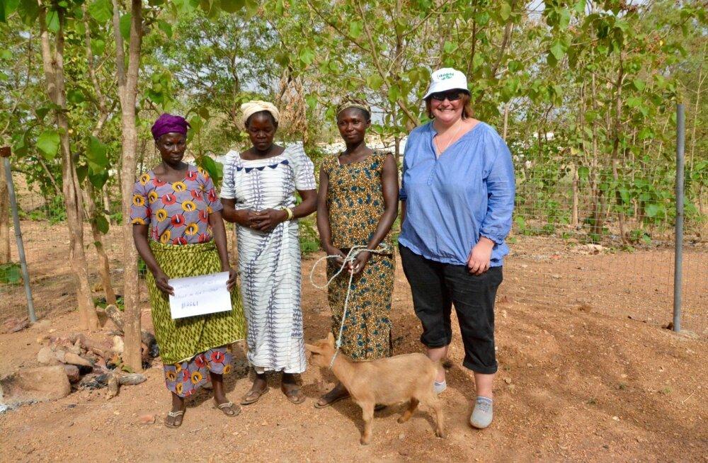 Paar aastat tagasi varustas Maaleht küll mõnd aafriklast kitsedega, kuid sinna mulda viia pole meie võimuses.