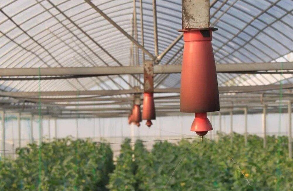 Hiinlased veavad kasvuhoonesse elektritraate: pestitsiide pole vaja ja taimed vohavad