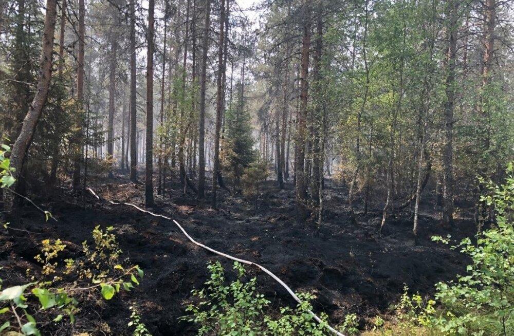 Vikipalus põleb 150 ha metsa