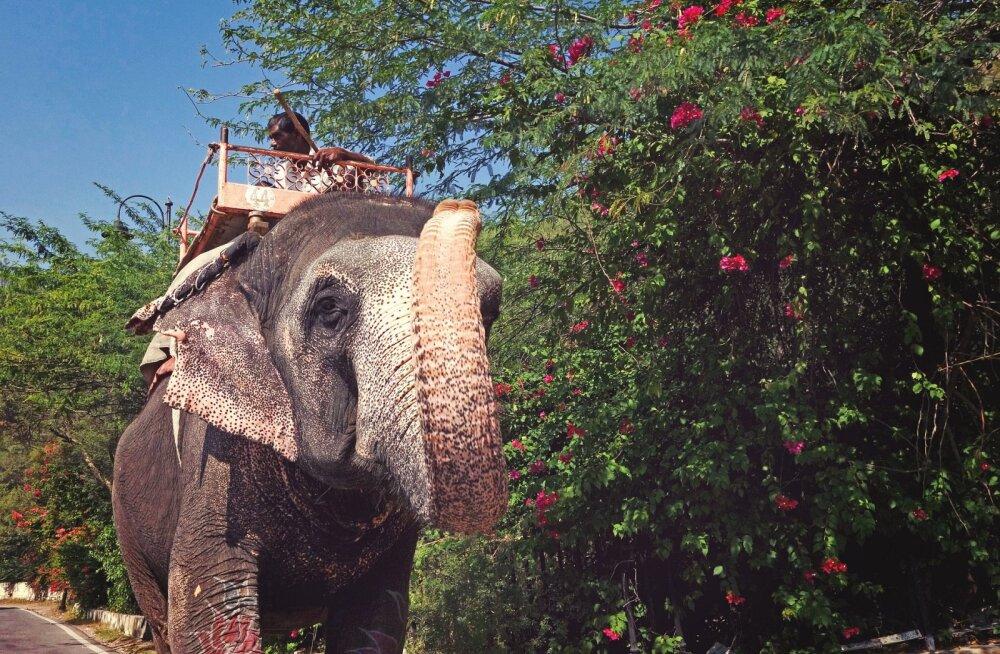 Ühe lõbusa elevandisõidu taga peituv varjatud tõde on südantlõhestav