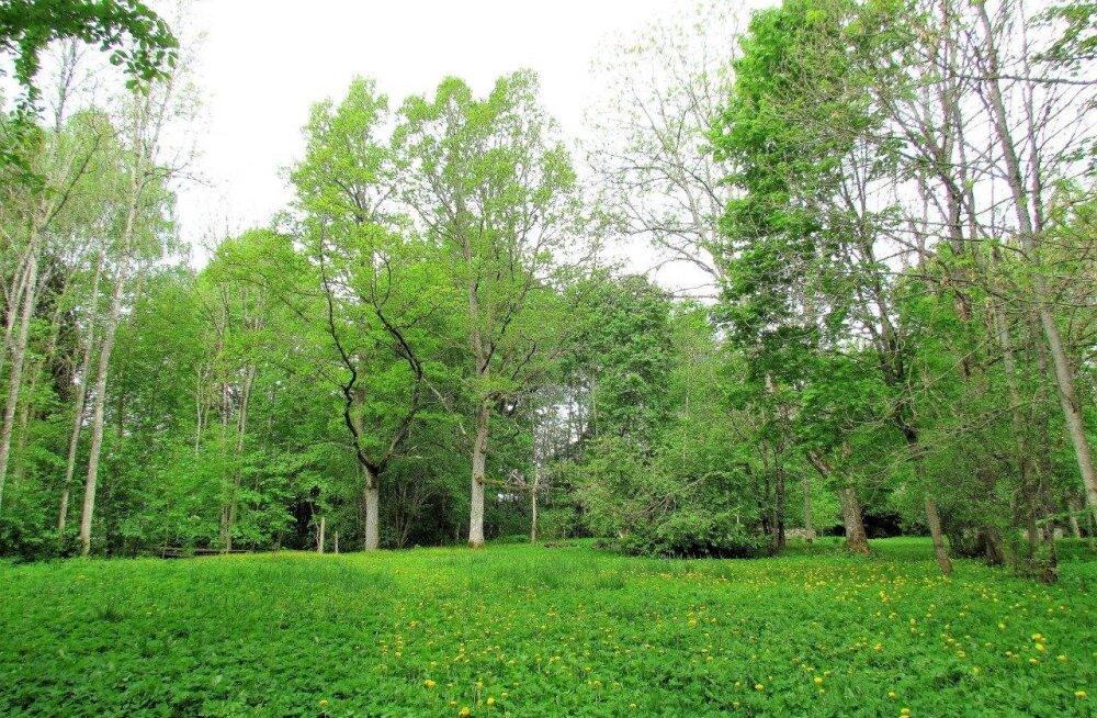 Leli metsalood | Mais on maailm roheline