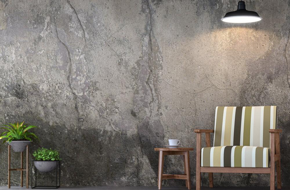 Kuidas kindlaks teha, kas praod seintes on ohtlikud? Prao kuju ja liikumissuund annavad vastuse