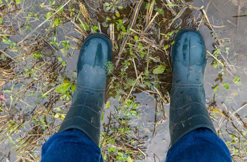 Vihm on viljapõllud üle ujutanud.