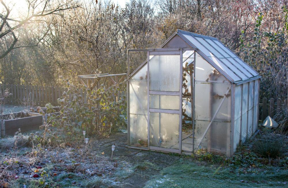 6 nippi, mis aitavad kasvuhoone talvekorda sättida