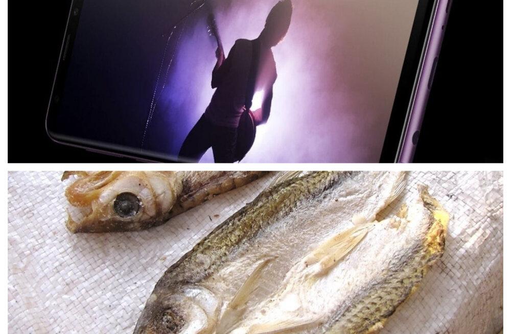 Nuudlid ja kuivatatud kala... Tehnoloogiahiid Samsung alustas kunagi tegevust hoopis teistel aladel