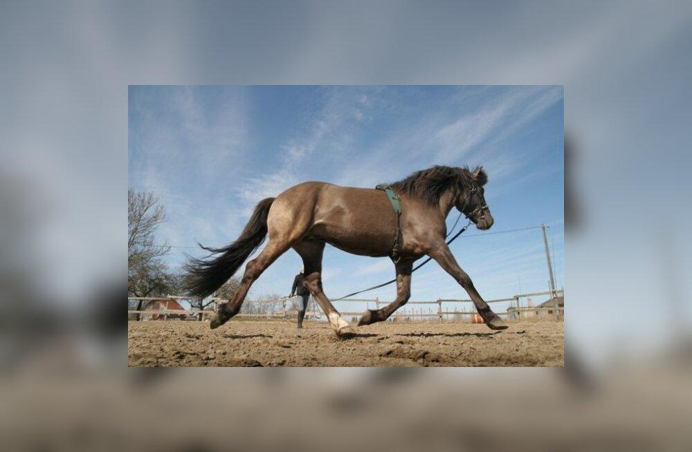 Millal on õige aeg hobune sadulasse panna?