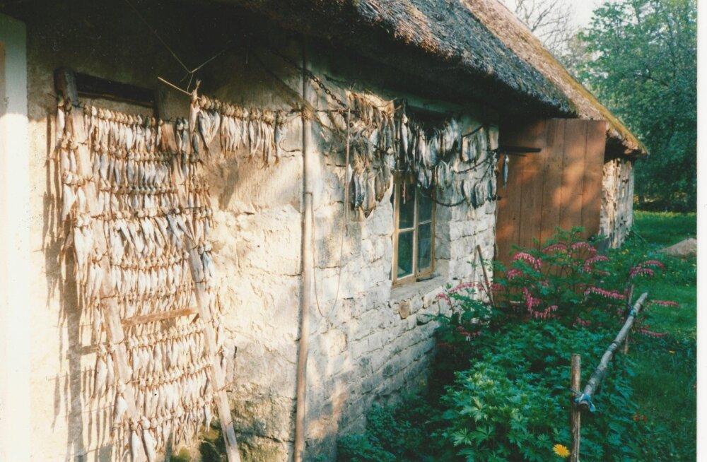 Kevadiste räimede kuivatamine Muhus Koguva külas eelmise sajandi viimastel aastatel.