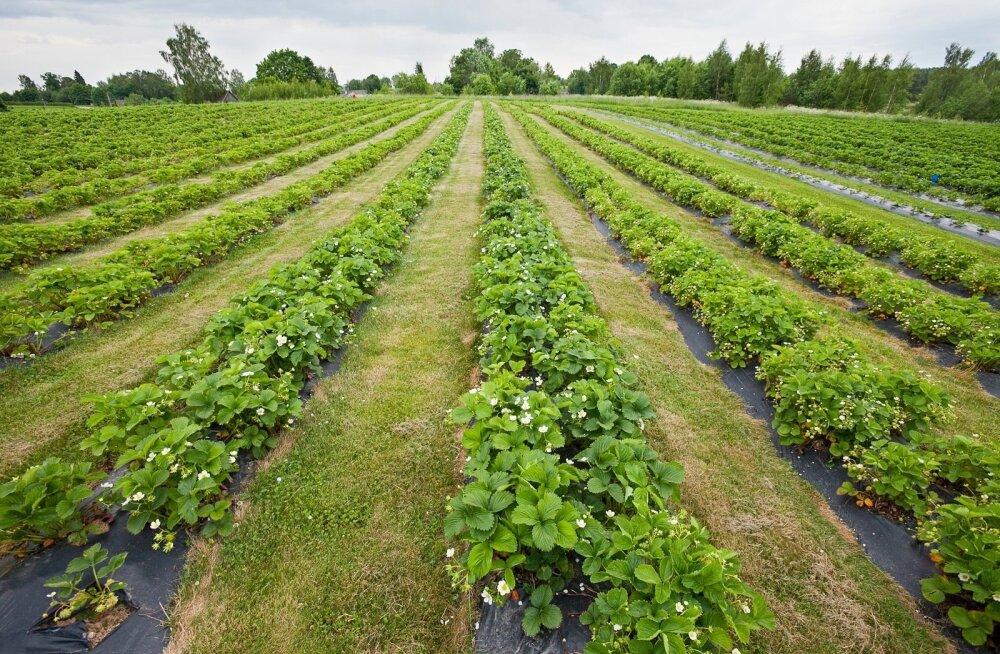 Еврокомиссия предлагает модернизировать и упростить единую сельхозполитику ЕС