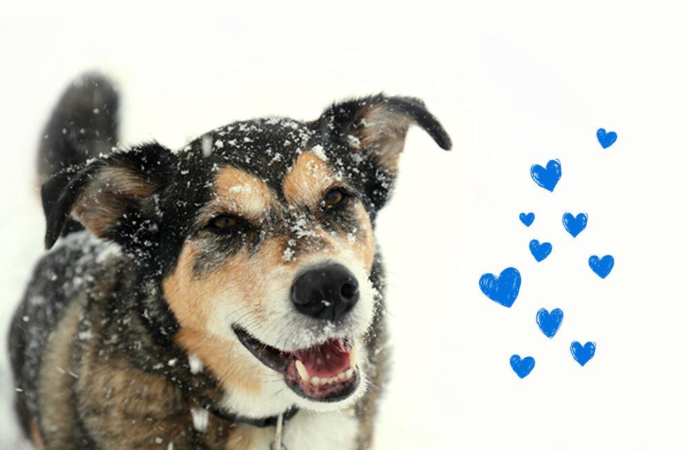 Зимние праздники — время чудес и подарков. Поможем бездомным животным!
