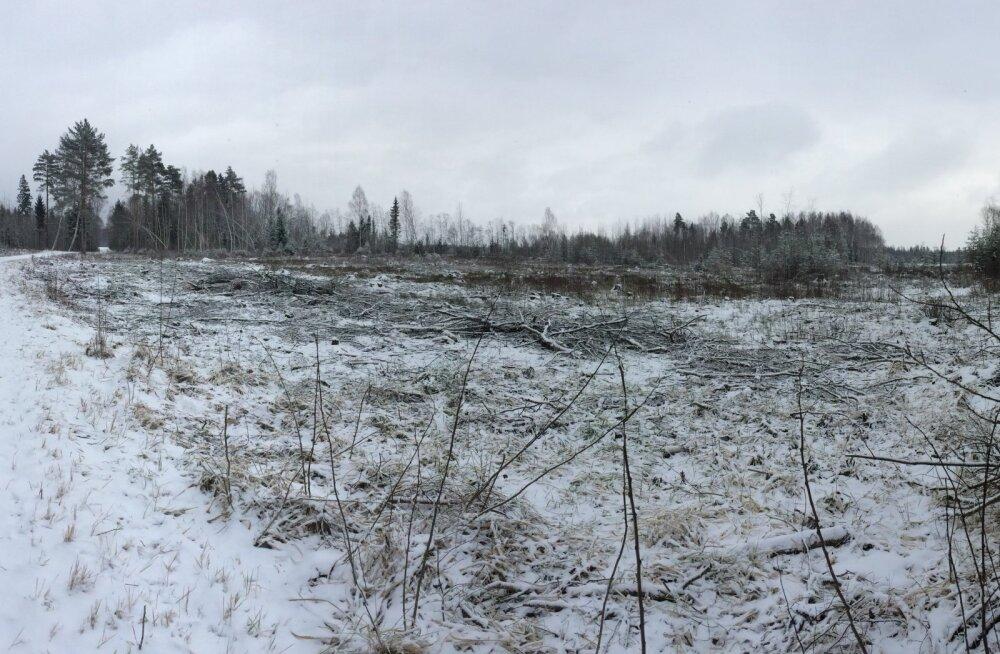 Lugeja kiri: nüüd olen veendunud, et lageraie ei ole metsahooldus - see on metsa mõrv