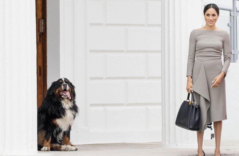 Kuninglik pere liikme võrra rikkam: prints Harry ja Meghan Markle võtsid koera