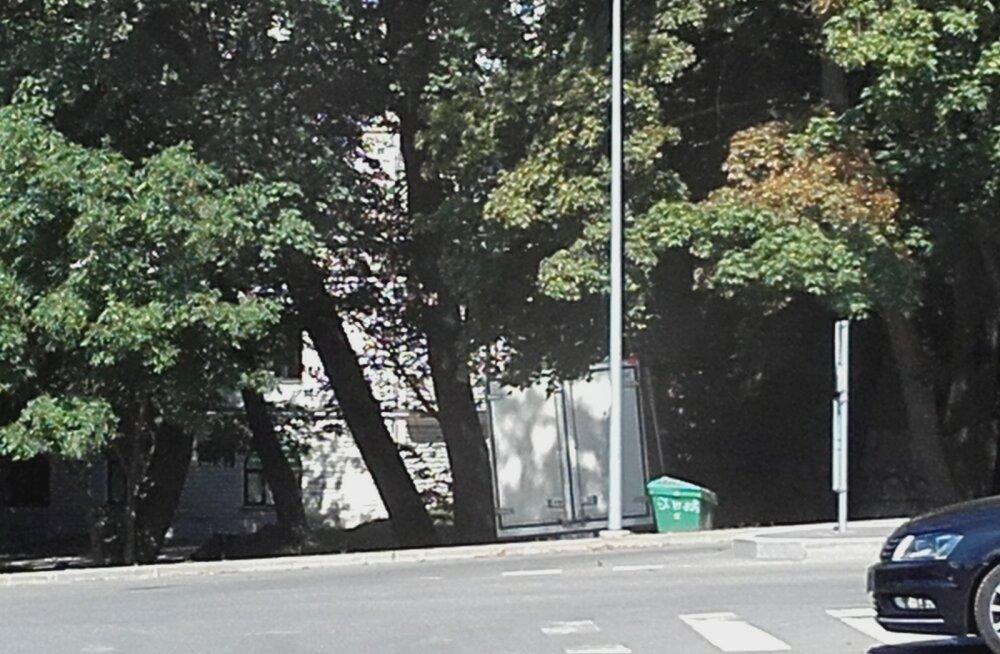 FOTO | Tallinnas pääses omatahtsi veerema kaubaauto, mis lõpetas oma teekonna parkla läheduses kasvavate puude all