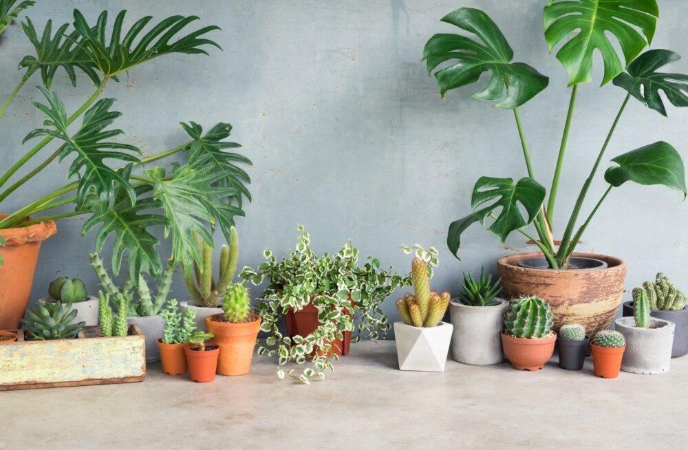 Võimalusel pange taimed talveks valgemasse kohta kokku.