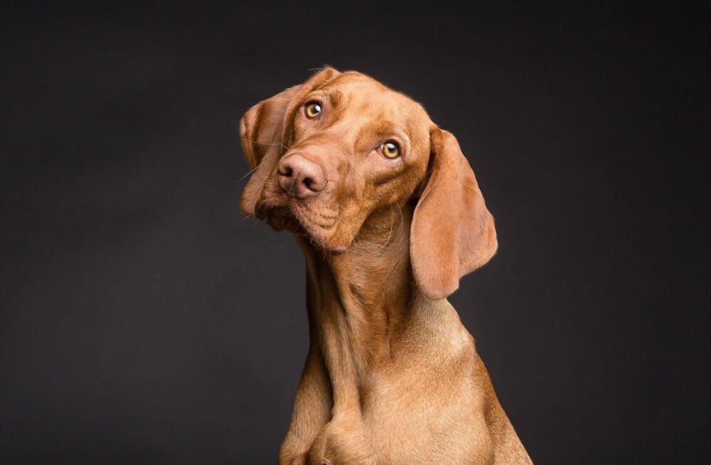 9 asja, mis ajab iga koera närvi, aga mida iga inimene ikkagi teeb