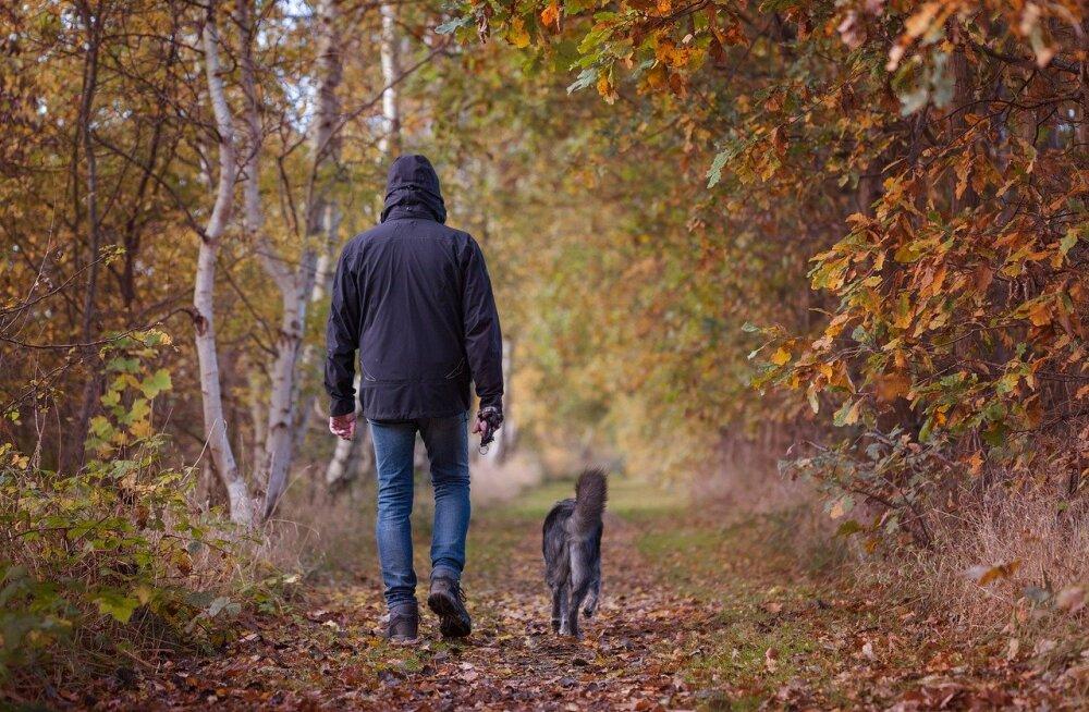 Jalutuskäigu imeline mõju: kuidas mõjutab regulaarne jalutuskäik sinu ja su koera suhet?