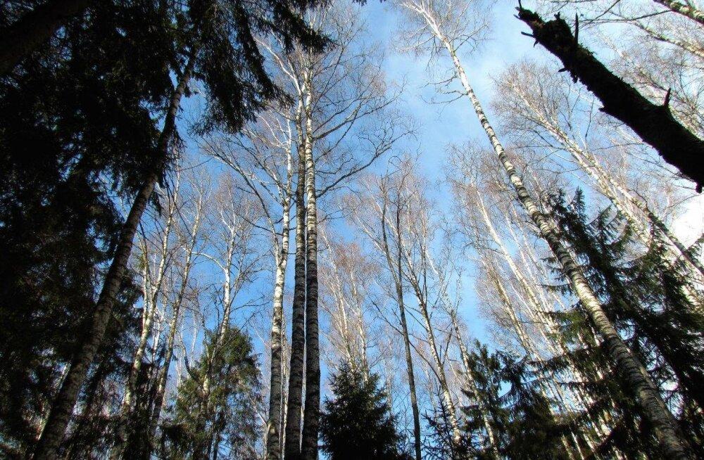 Leili metsalood | Kevadine pööripäev