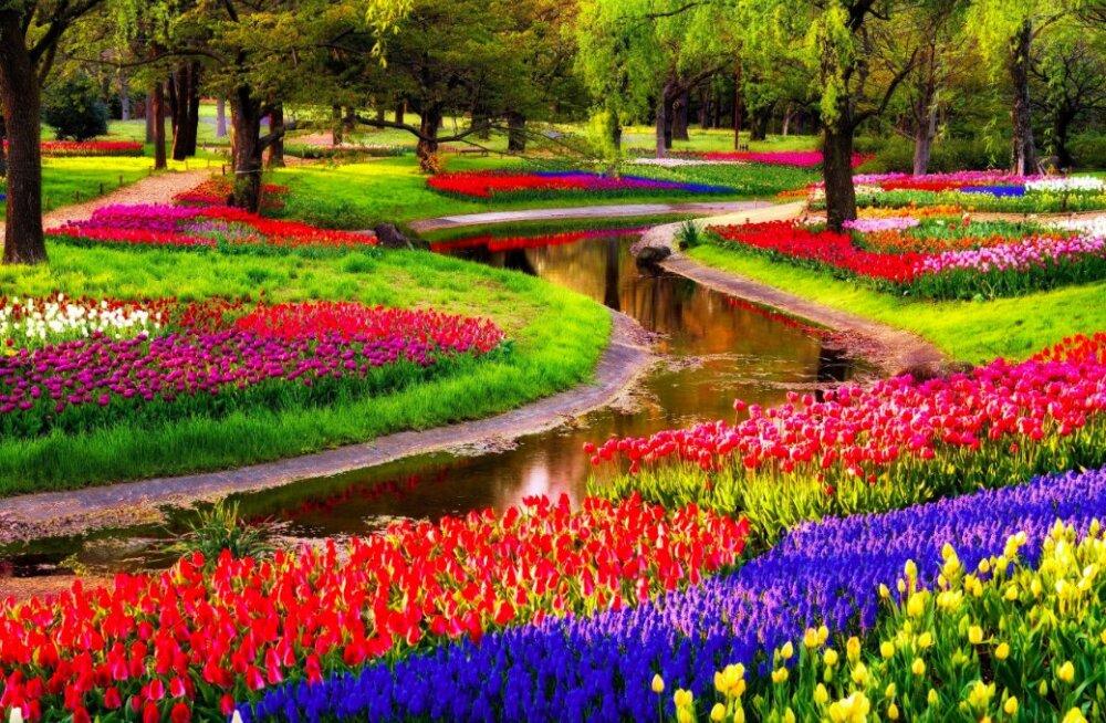 Kõige kaunimad pargid maailmas, kus kevadist lillemerd imetleda