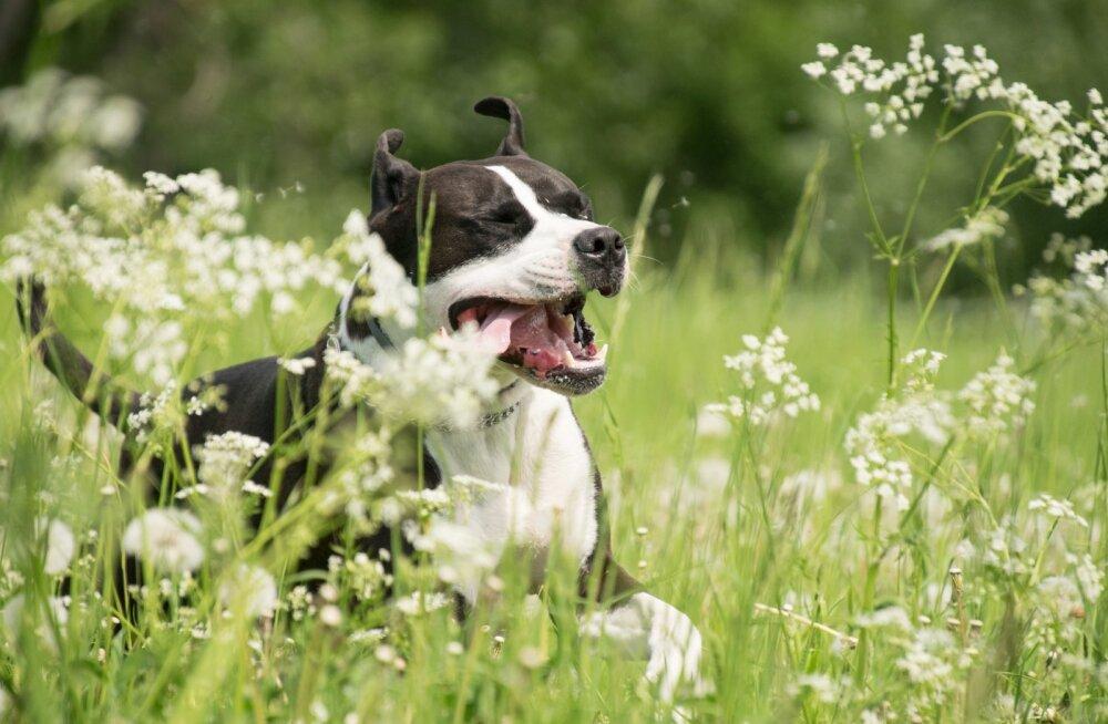 Loodus kutsub nautima: kuidas oma lemmiklooma kuumal suveilmal kaitsta?