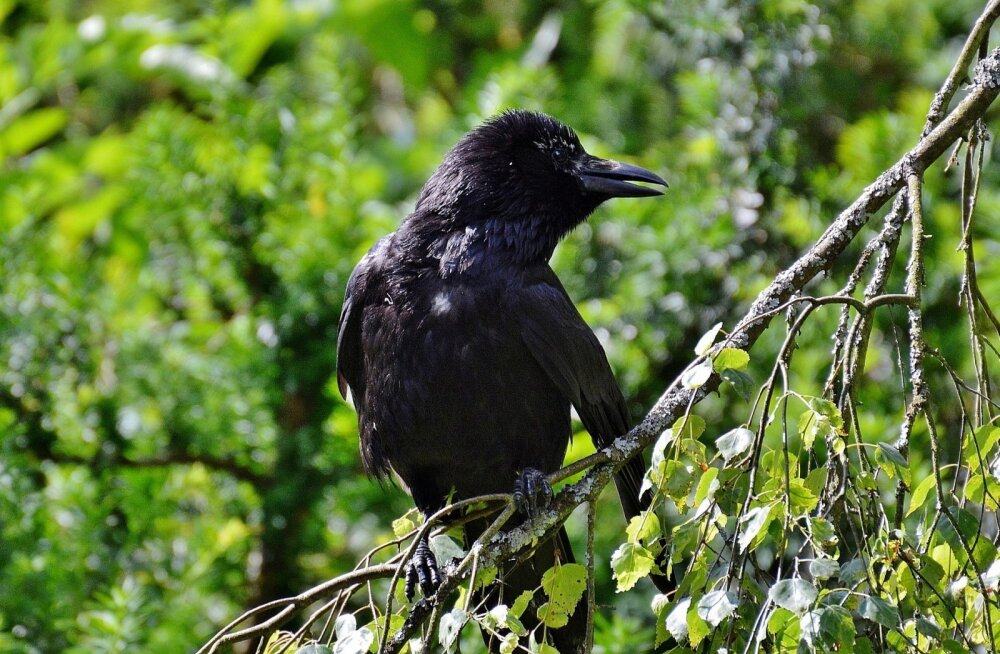 ФОТО: В Хаапсалу творятся таинственные дела: на кладбище гибнут птицы, а живые ведут себя более чем странно