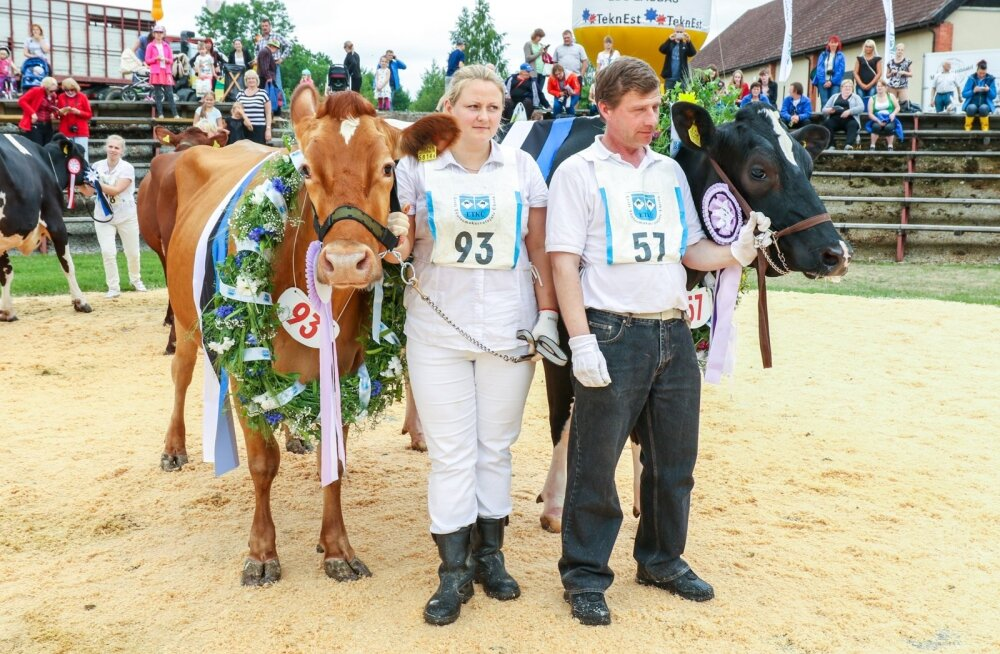 Eesti parima välimusega lehmad Taara ja Siili koos juhendajatega.