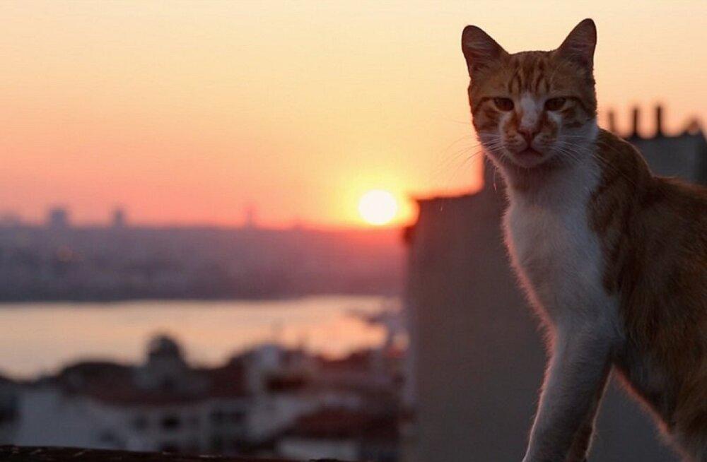 Nädalavahetuse kinokülastuse üllataja on dokfilm Istanbuli tänavakassidest