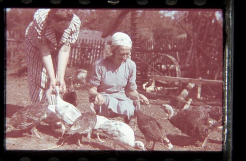 Tule ajalukku!   2008: Sadamast avastati taas määrdunud linnud