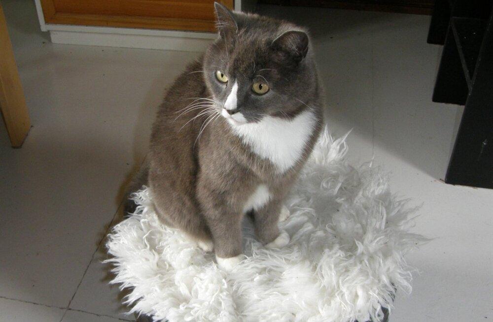 Tumbast on saanud kassi majake ja elanik on selle omaks võtnud.