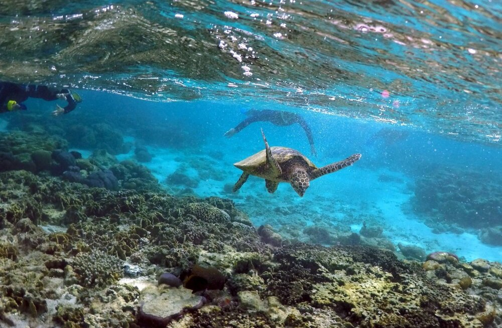 Mangroovisalusid Austraalia kaldal ja koralle merepõhjas ähvardab liigsoojast veest tingitud pleekimine ja surm.