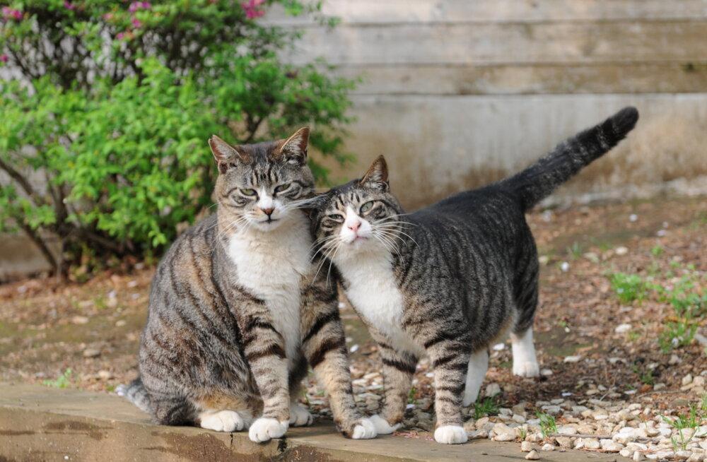 15 tõsist haigust, mis sind lemmikloomade kaudu ohustavad. Mida teha nakatumiste vältimiseks?