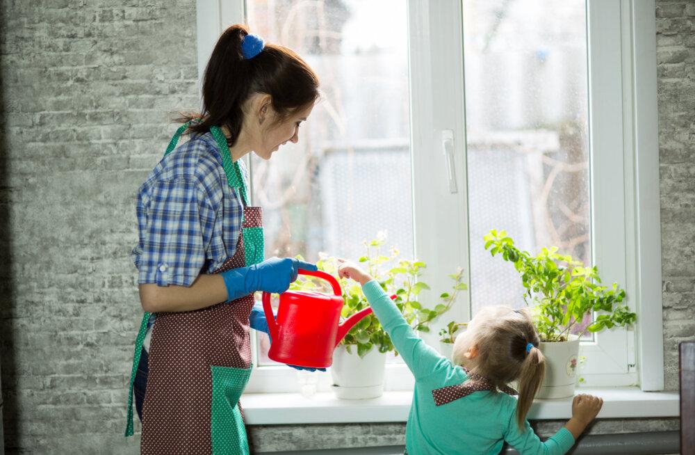 AEDNIK SELGITAB | Milline vesi on toataimele parim?