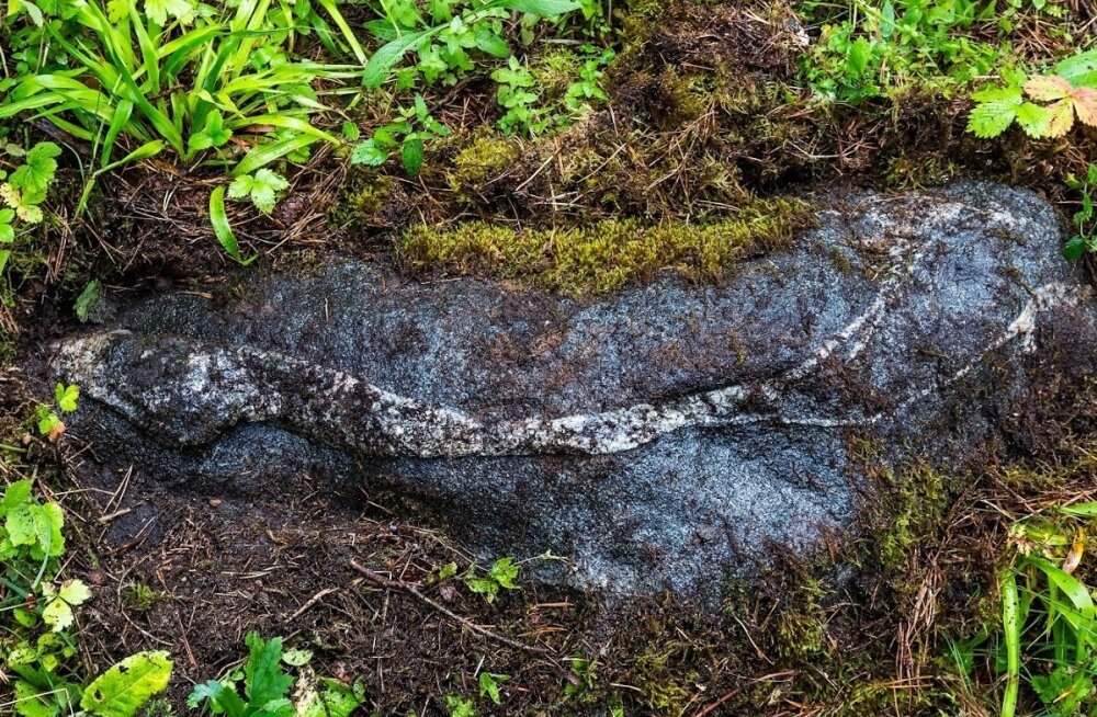 Ussikivi Saaremaa muinasobservatooriumis. Kohaliku ussikultuse konteksti asetub see kivi kahtlemata. Kui viisnurk on emajumala sümbol, siis madu on emajumaliku tarkuse võrdkuju. Kivisse jäädvustunud madu maa peal ja Põhjamao nimeline tähtkuju kõrgel üleva