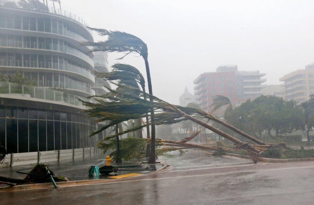Orkaan murdis eile Miamis palme.