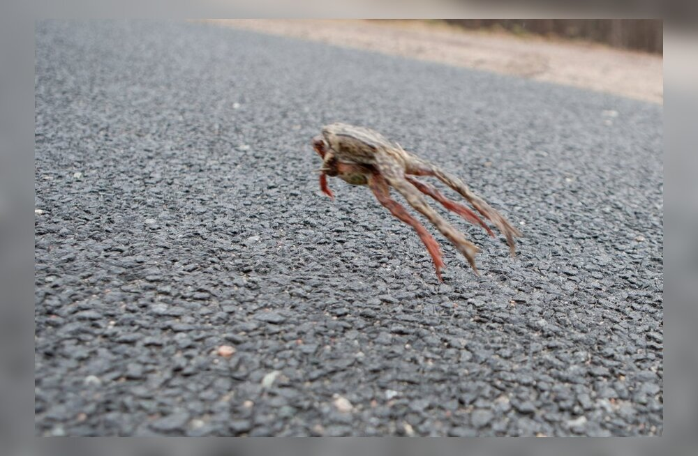 FOTOD: Ettevaatust, konnad teel!