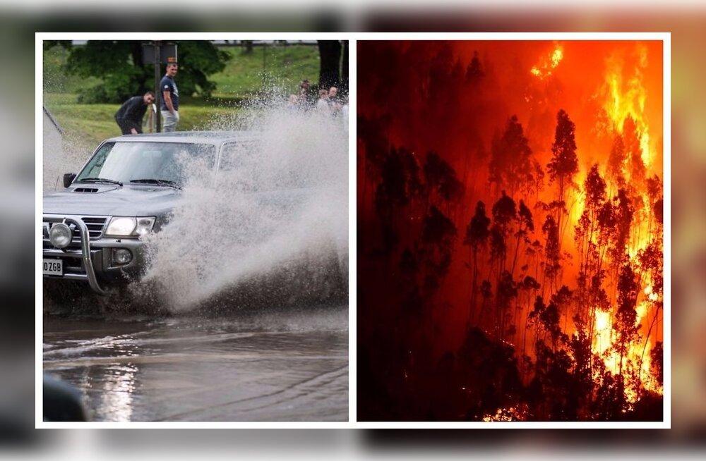 Эксперт по климату — о лесных пожарах на юге Европы и дождях в Эстонии