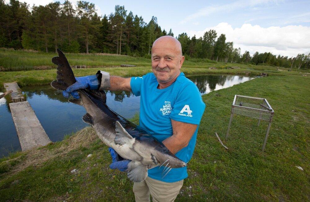 OÜ Simuna Ivaxi juhataja Hans Kruusamägi leiab, et vilja- ja kalakasvatus täiendavad teineteist hästi.