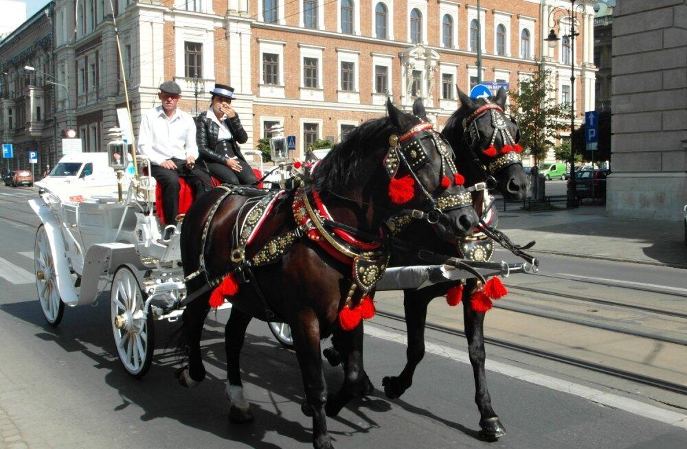 ФОТО читателя Delfi: Что еще вы не видели в польском Кракове?