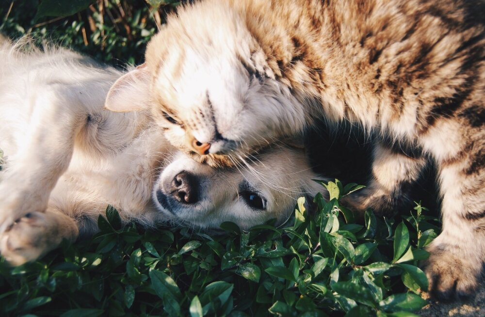 Üllatusi täis elu koos neljajalgsetega: 11 asja, mida ainult loomaomanikud mõistavad