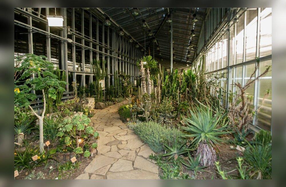 Botaanikaaias-8