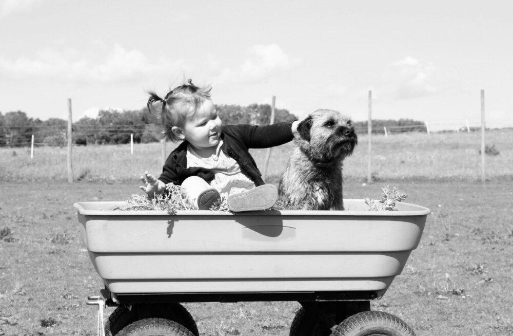 """""""Emme, osta mulle koer!"""" — kuidas selle sooviga toime tulla ja kuidas lapsele ära öelda?"""