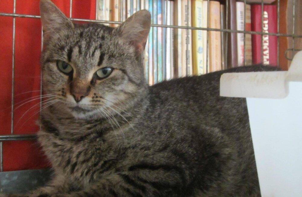 Tikri liigutav lugu: Pesaleidja MTÜ võttis oma kaitsva tiiva alla kassi, kellest omanikud soovisid vaid julmal viisil vabaneda