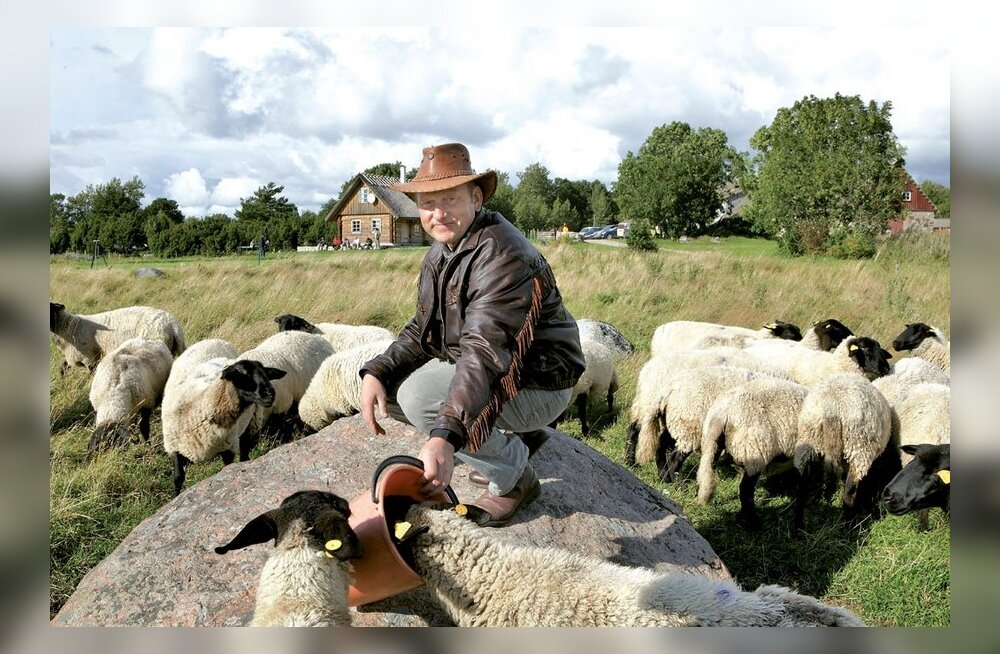 Koit Kull on Saaremaa suurim lambakasvataja
