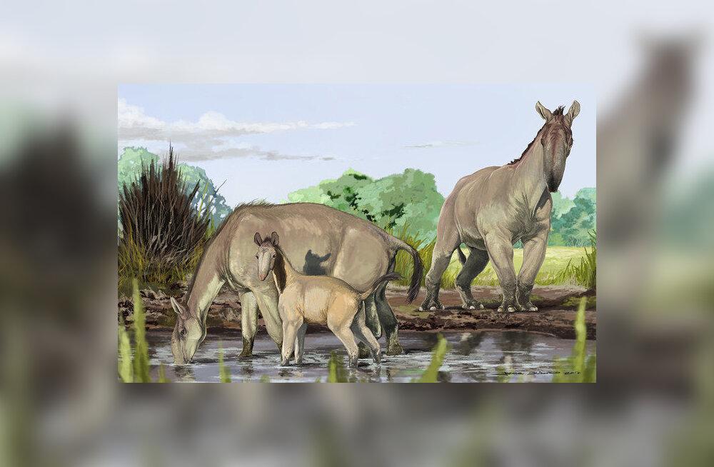 Darwini nõutuks jätnud 200-aastane mõistatus on lõpuks lahenduse saanud